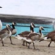 Goose Crossing Mayville Park Art Print