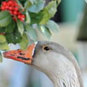 Goose Eating Berries Art Print