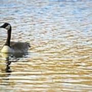 Goose On The Pond Art Print