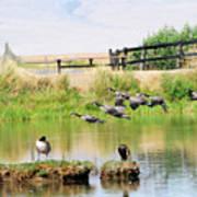 Goose Pond Art Print