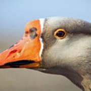 Goose Portrait Art Print