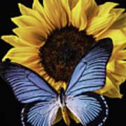 Gorgeous Blue Butterfly Art Print