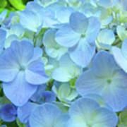 Gorgeous Blue Colorful Floral Art Hydrangea Flowers Baslee Troutman Art Print