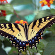 Gorgeous Butterfly Art Print