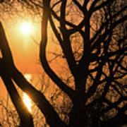 Gorgeous Morning Through The Tree Screen Art Print