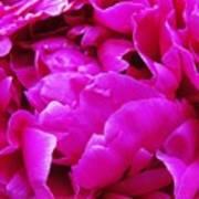Gorgeous Pink Art Print