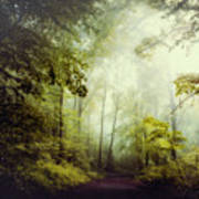 Gorgeous Woods Art Print