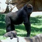 Gorillas Mary Joe Baby And Emonty Mother 6 Art Print
