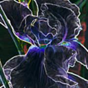 Gothic Iris Art Print