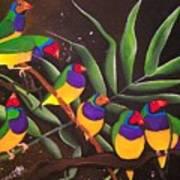 Gouldian Finch Rainbow Art Print