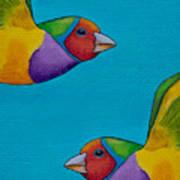 Gouldian Finches Art Print