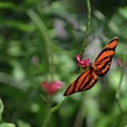 Graceful Oak Tiger Butterfly Around Pink Flowers Art Print
