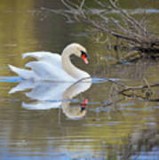 Graceful Swan I Art Print