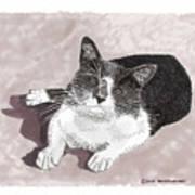 Gracie Jacks Cat Now Art Print