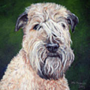 Gracie, Soft Coated Wheaten Terrier Art Print