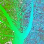 Gradient Tree  Art Print