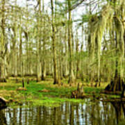 Grand Bayou Swamp Art Print