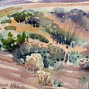 Grand Canyon Flora Study 77 Art Print