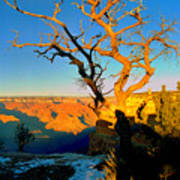 Grand Canyon National Park Winter Sunrise On South Rim Art Print