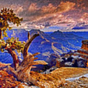 Grand Canyon Pine Art Print