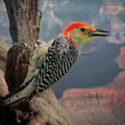 Grand Canyon Woodpecker Art Print