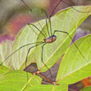 Grandaddy Long Legs Art Print