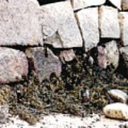 Granite And Seaweed Art Print