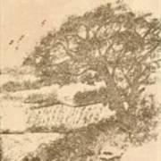 Grape Arbor On Brown Art Print