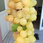 Grape From Chios Mountains In Greece Art Print