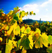 Grape Leaves And The Sky Print by Elaine Plesser