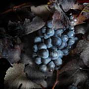 grape vine I Art Print