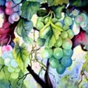Grapes II Art Print