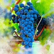 Grapes Of The Vine Art Print