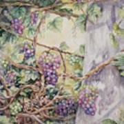 Grapevine Laurel Lakevineyard Art Print