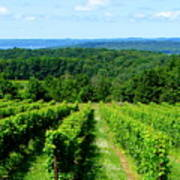 Grapevines On Old Mission Peninsula - Traverse City Michigan Art Print