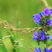 Grass And Flower  Art Print