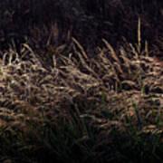 Grass At Sunset Art Print