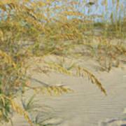 Grass On The Beach Sand Art Print