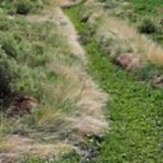 Grass Path Art Print