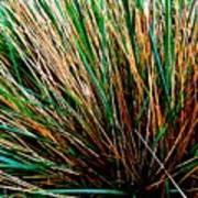 Grass Tussock Art Print