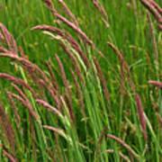 Grass3 Art Print