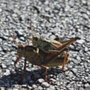 Grasshoper Love Art Print