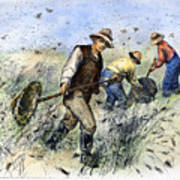 Grasshopper Plague, 1888 Art Print