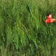 Grassland And Red Poppy Flower 2 Art Print