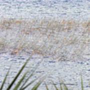 Grassy Waters Art Print