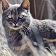 Gray Cat In Woods Art Print