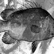 Gray Fish Art Print