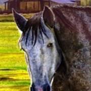 Gray Horse Art Print