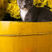 Gray Kitten In Yellow Bucket Art Print