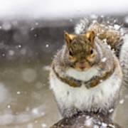 Gray Squirrel Art Print